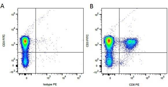 CD8 Antibody | YCATE55.9 gallery image 9