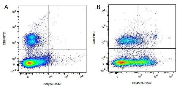 CD8 Antibody | YCATE55.9 gallery image 6