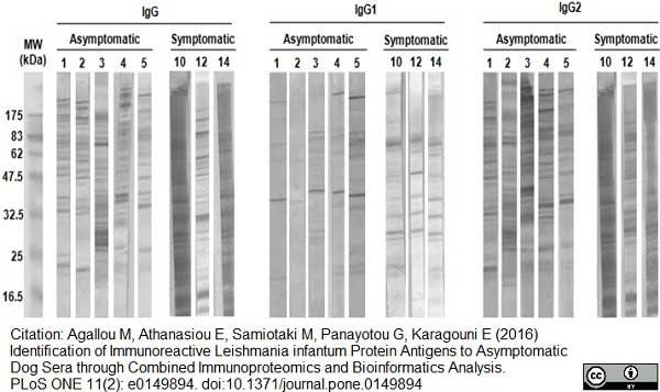 IgG1 Antibody gallery image 1