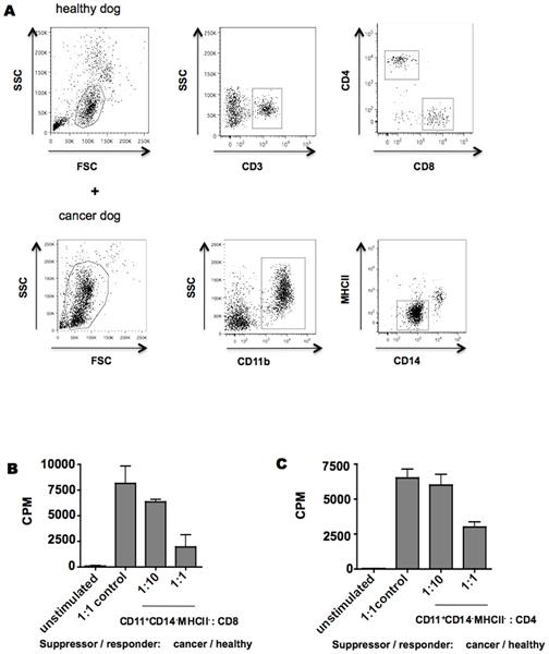 MHC Class II Monomorphic Antibody | YKIX334.2 gallery image 3