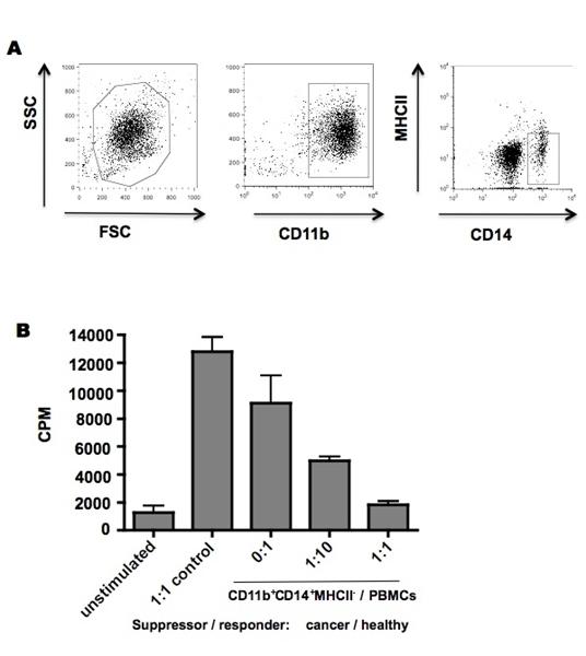 MHC Class II Monomorphic Antibody | YKIX334.2 gallery image 4