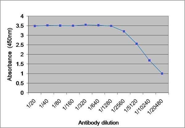 Tyrosinase Antibody gallery image 1