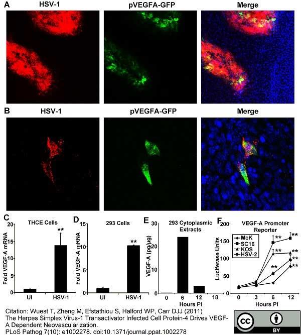 Green Fluorescent Protein Antibody thumbnail image 1