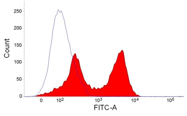T Lymphocytes Antibody   MsGp7 gallery image 1