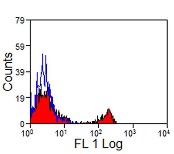 CD8 Antibody | CVS8 gallery image 2