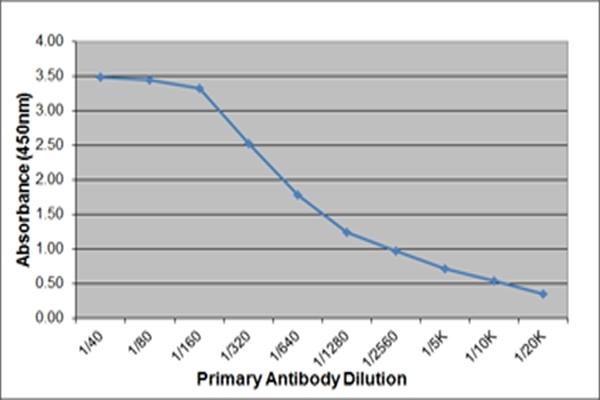 IgE Antibody | 3H10 gallery image 2