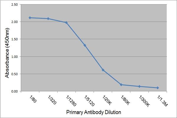 IgE Antibody | 3H10 gallery image 1