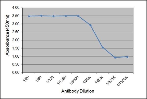 IgGb Antibody   CVS39 gallery image 1