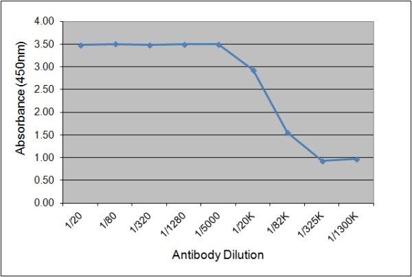 IgGb Antibody | CVS39 gallery image 1