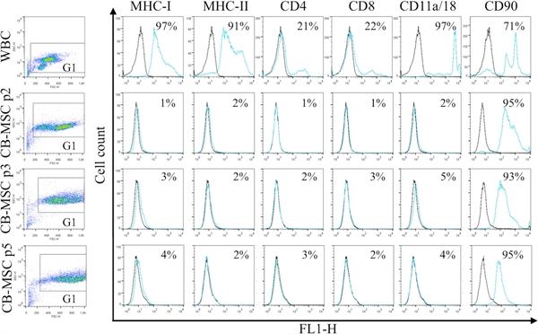MHC Class I Monomorphic Antibody | CVS22 gallery image 4