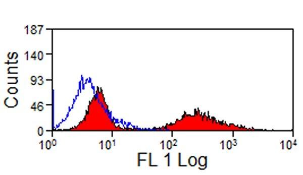 MHC Class II Monomorphic Antibody | CVS20 gallery image 1