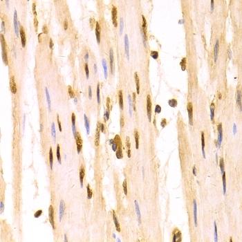 14-3-3 Sigma Antibody gallery image 8