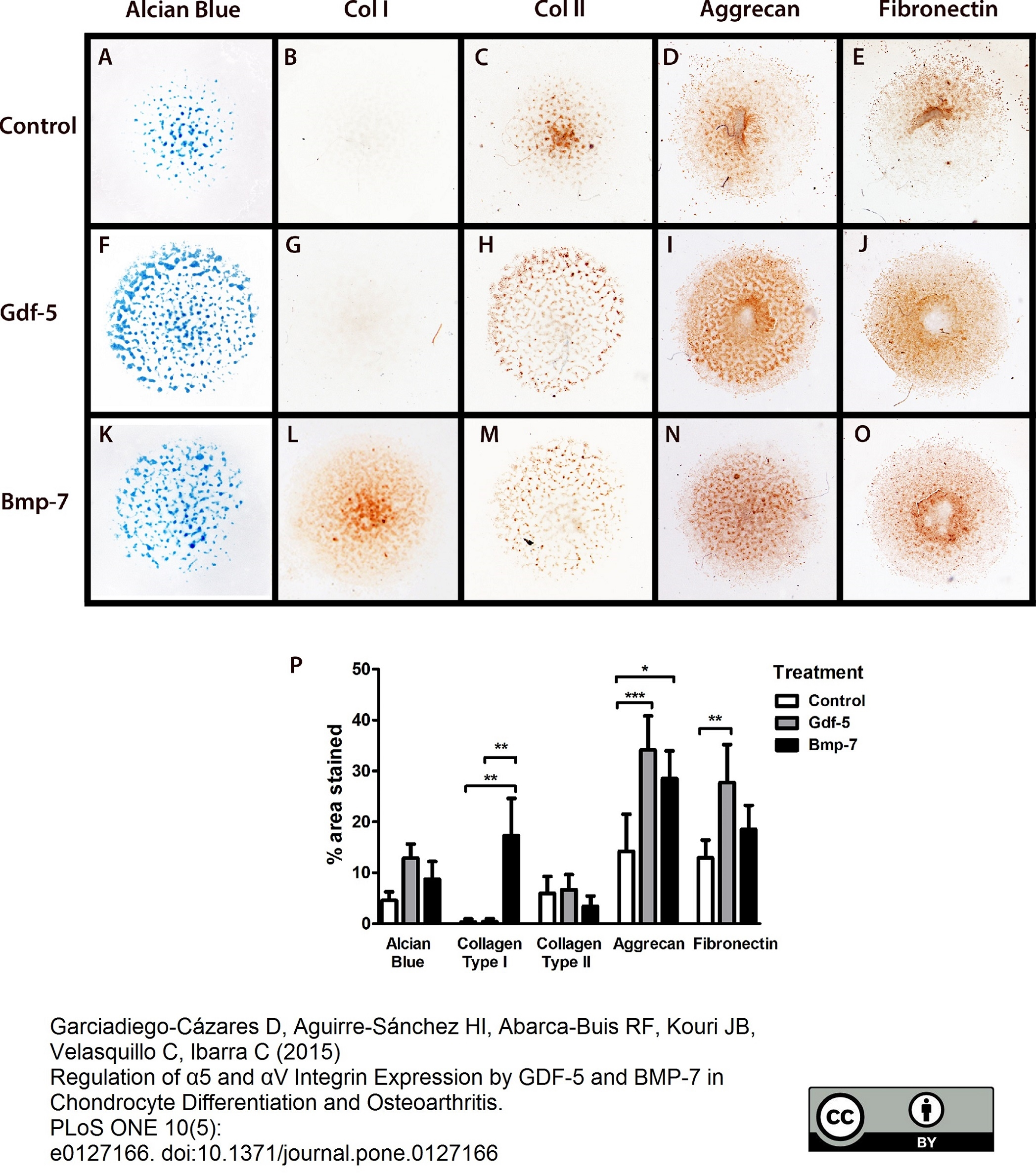 Aggrecan Antibody | 7E1 gallery image 1