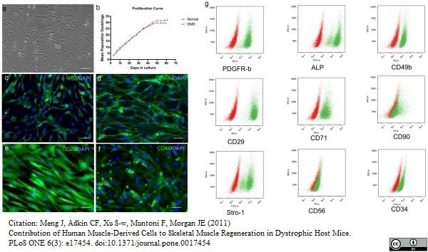 Alkaline Phosphatase Antibody gallery image 2