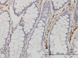 Annexin V Antibody | 1F4-1A5 gallery image 2