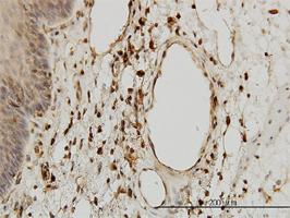 Beta 2 Microglobulin Antibody | 3F9-2C2 gallery image 1