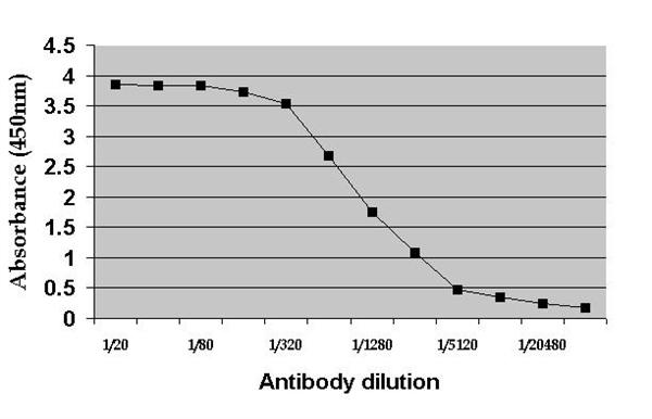 c-Myc Antibody | 9E10 gallery image 1