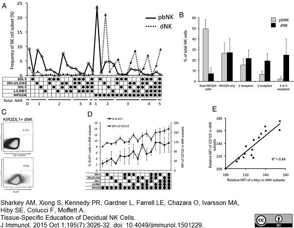 c-Myc Antibody | 9E10 thumbnail image 3