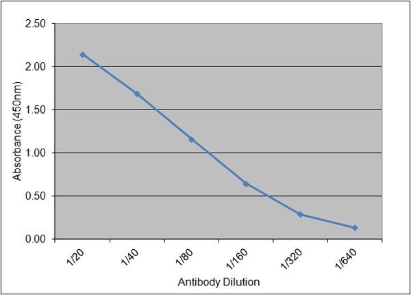 C-Reactive Protein Antibody   160.1E12 gallery image 1