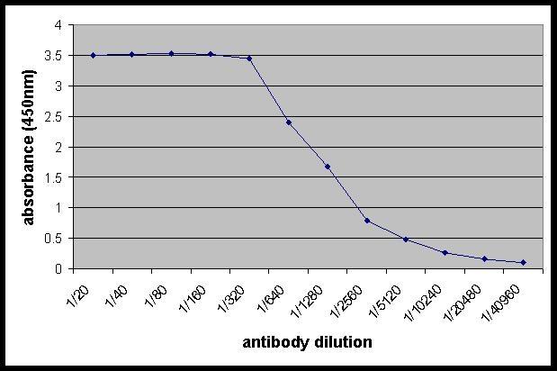 Cathepsin B Antibody gallery image 1