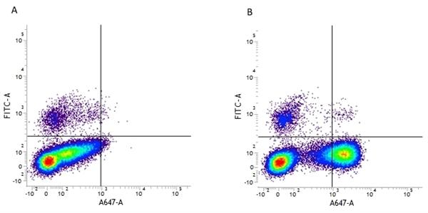 CD10 Antibody | SN5c gallery image 1