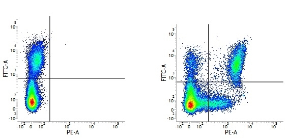 CD11c Antibody | BU15 gallery image 1