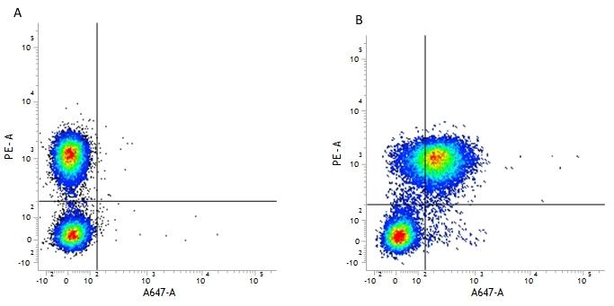 CD127 Antibody | AbD11592 gallery image 4