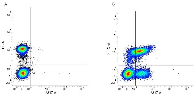 CD127 Antibody | AbD11592 gallery image 3