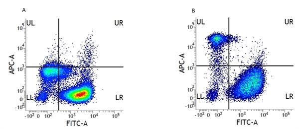 CD14 Antibody | UCHM1 gallery image 2