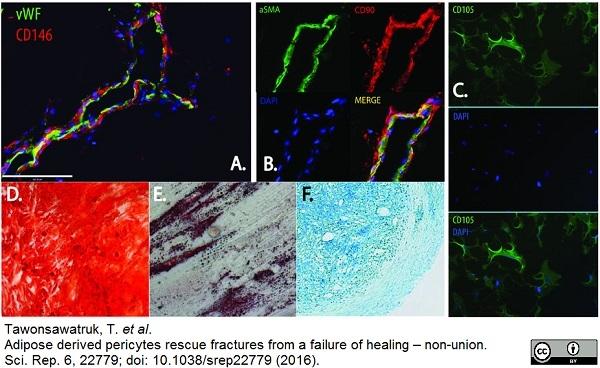 CD146 Antibody | OJ79c gallery image 4