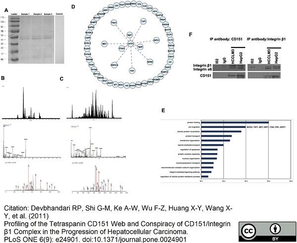 CD151 Antibody | 11G5a gallery image 4