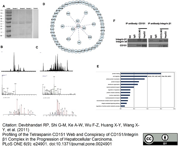 CD151 Antibody   11G5a gallery image 4