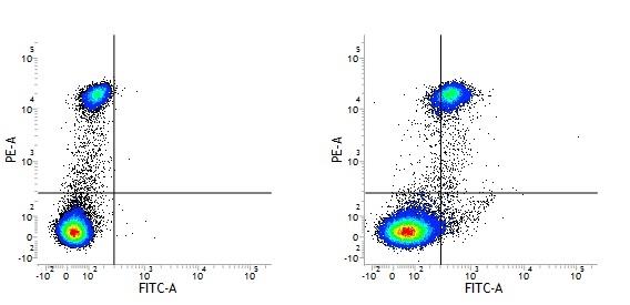 CD163 Antibody | EDHu-1 thumbnail image 19