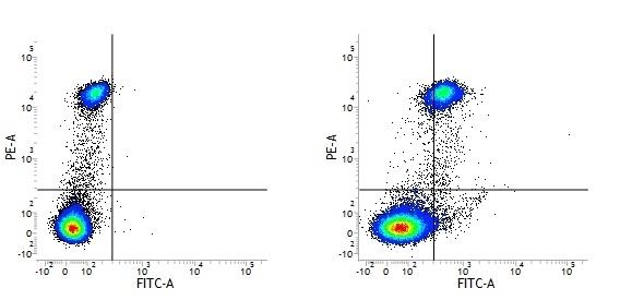 CD163 Antibody | EDHu-1 gallery image 19