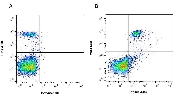 CD163 Antibody | EDHu-1 gallery image 2