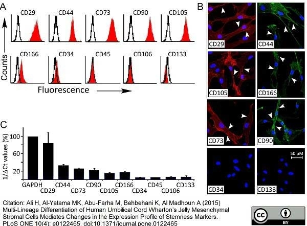 CD166 Antibody | 3A6 gallery image 3