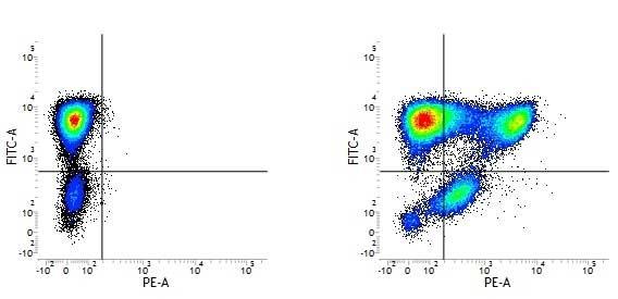 CD177 Antibody | MEM-166 gallery image 1