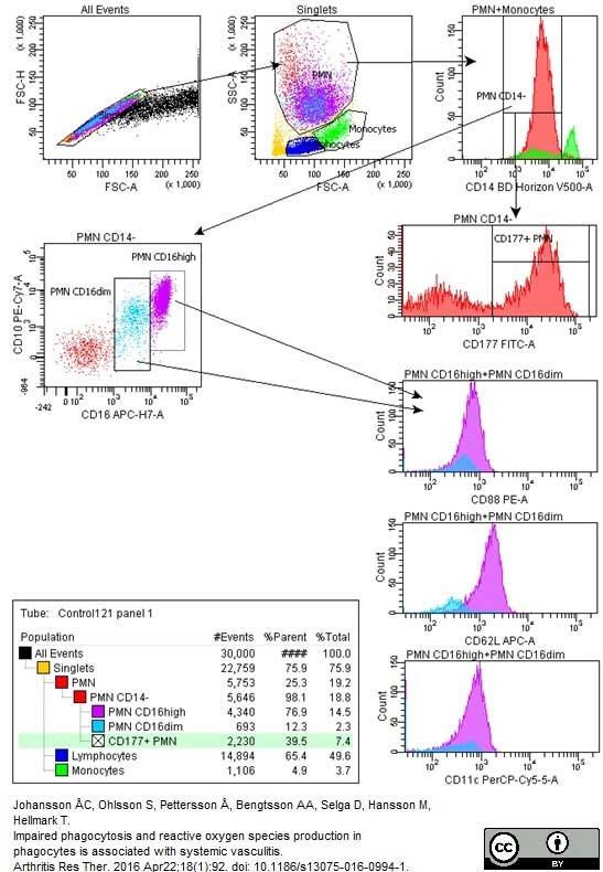 CD177 Antibody | MEM-166 gallery image 2