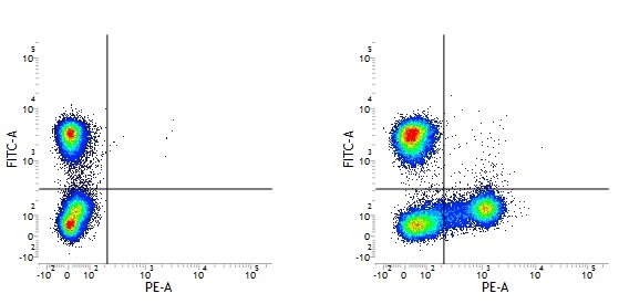 CD18 Antibody   MEM-148 gallery image 1
