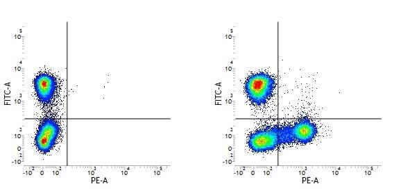 CD18 Antibody   MEM-148 thumbnail image 5