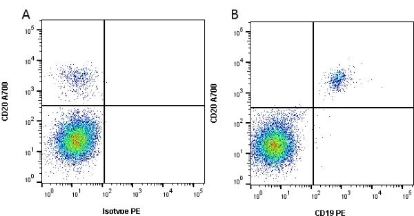 CD19 Antibody | Bu12 gallery image 3