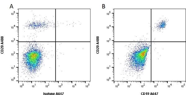CD19 Antibody | Bu12 gallery image 1