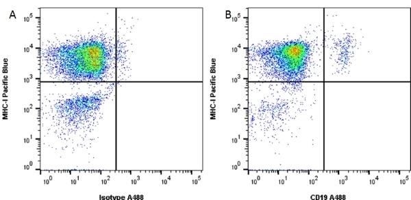 CD19 Antibody | LT19 gallery image 5