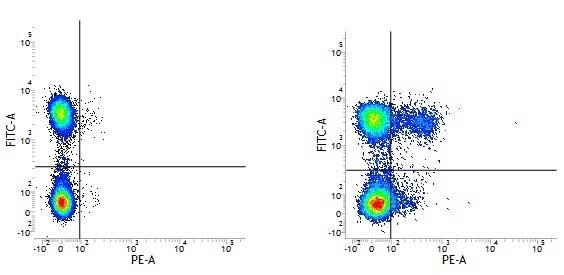 CD195 Antibody | HEK/1/85a gallery image 1