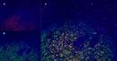 CD1a Antibody | NA1/34-HLK thumbnail image 13
