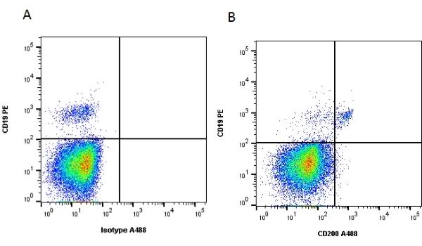CD200 Antibody | OX-104 gallery image 1