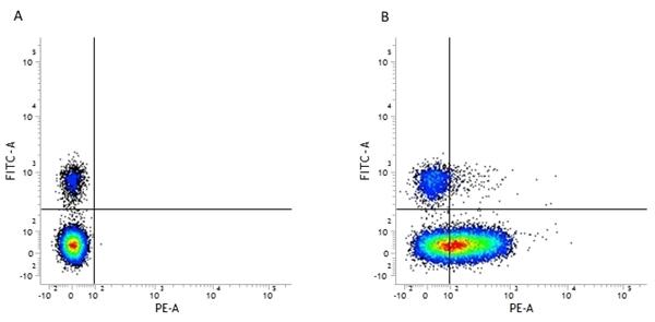 CD226 Antibody | DX11 gallery image 2