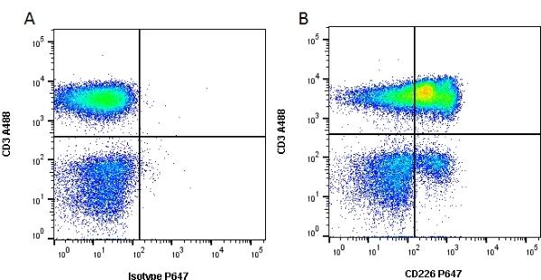 CD226 Antibody | DX11 gallery image 1