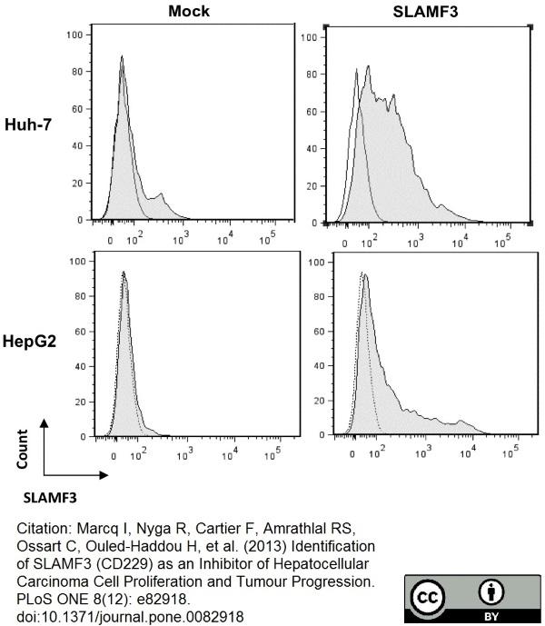 CD229 Antibody | HLy9.1.25 gallery image 8