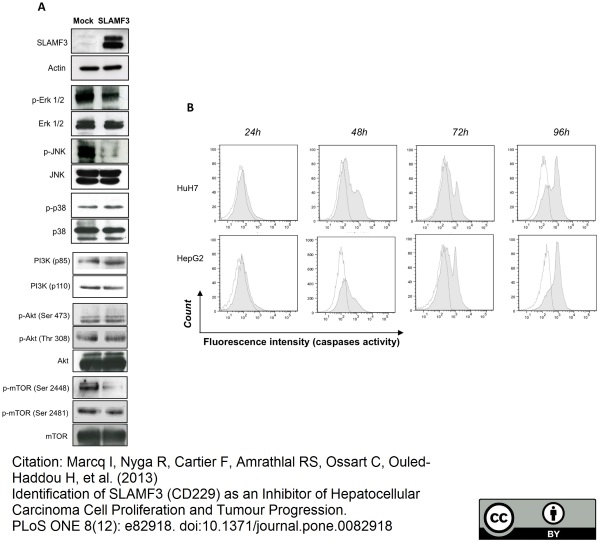 CD229 Antibody | HLy9.1.25 gallery image 5
